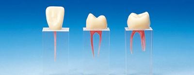 Каналы зубов
